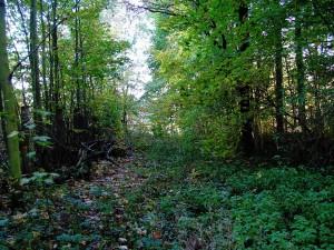 2009-10_Herbst_Schlosspark_Neusorge_vier_Jahreszeiten_1