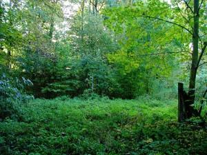 2009-10_Herbst_Schlosspark_Neusorge_vier_Jahreszeiten_2