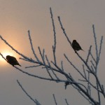 2012_januar_kontrast_sonne