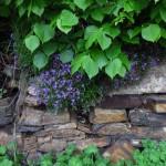 2013-05_Natur_Garten