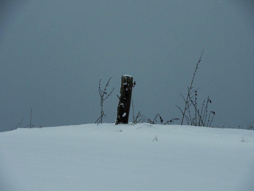 2017_januar_schloss_dorf_011_weidepfahl_001k