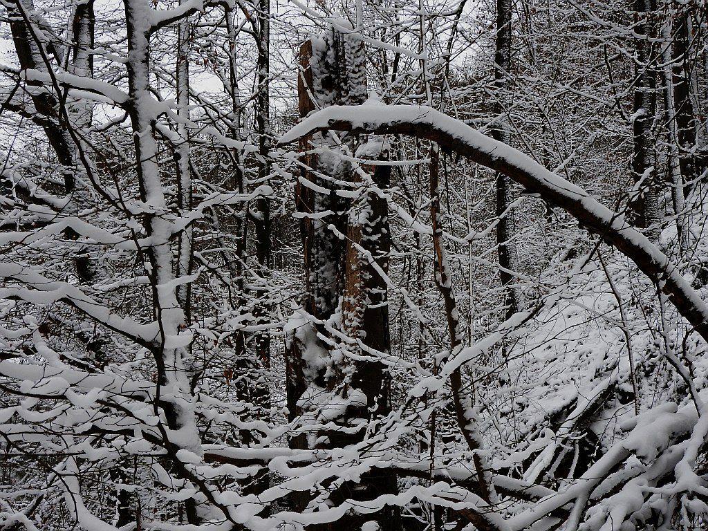 2017_januar_schloss_dorf_024_zschopau_003k